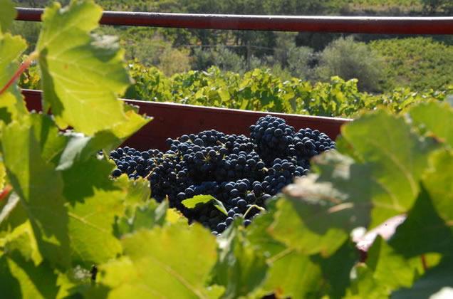 French wine: Wine cote du Rhone Domaine de la Combe Juliere
