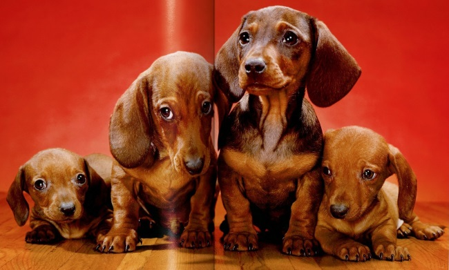 DOG BOOKS CHANDOHA PHOTOGRAPHY TOGETHER MAGAZINE